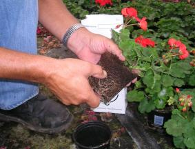 Potting Soil and Coco Peat
